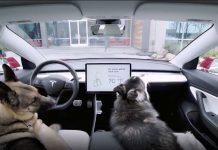 """Tesla lance un """"Dog Mode"""" pour nos amis les bêtes !"""
