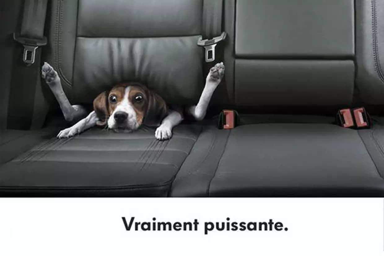 Publicité chien Golf VR6