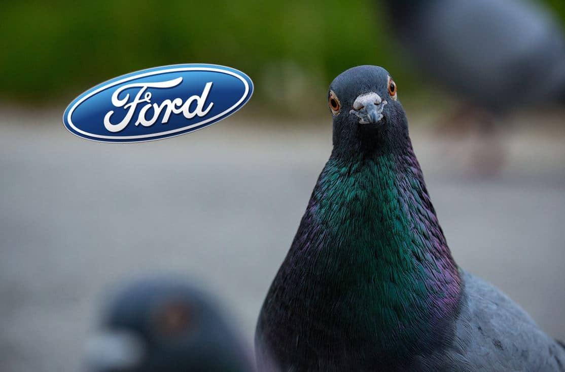 Ford fientes oiseaux